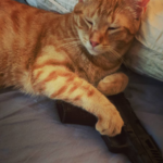 10 Reasons for the use of Service Cats in the military